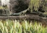 Teleosaurus model